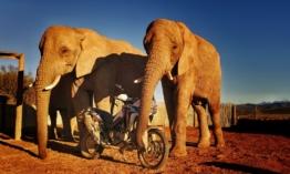 Ismét útra kelnek az Africa Twinek