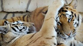 Segítséget kérnek a Gyöngyösi Állatkert lakói!